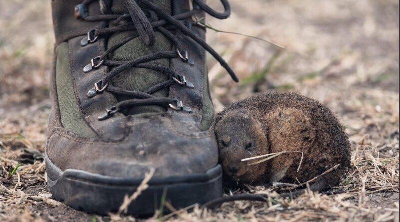 La conmovedora foto del ratoncito, chamuscado y asustado, buscando refugio del fuego en una bota. (Marcelo Manera/La Nación)